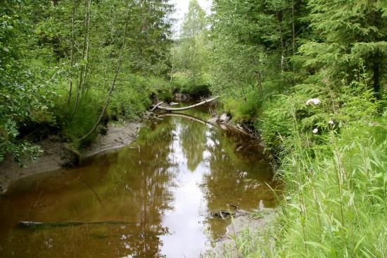 skogen 070